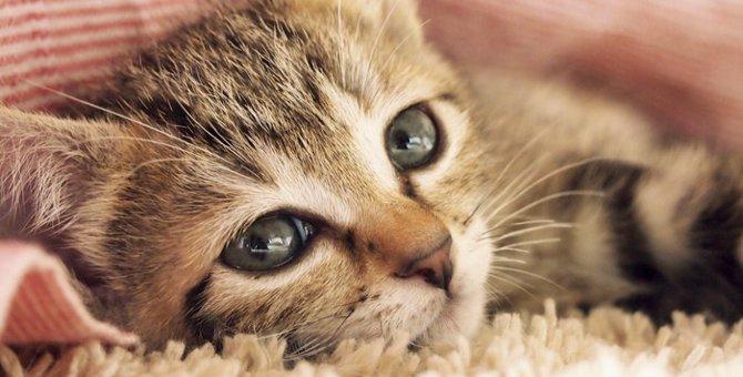 鳴き声でわかる子猫の気持ち