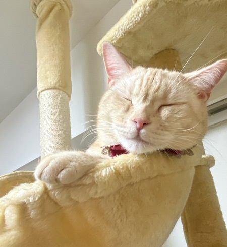 猫の幸せのために飼い主が心がけるべき『5つのこと』