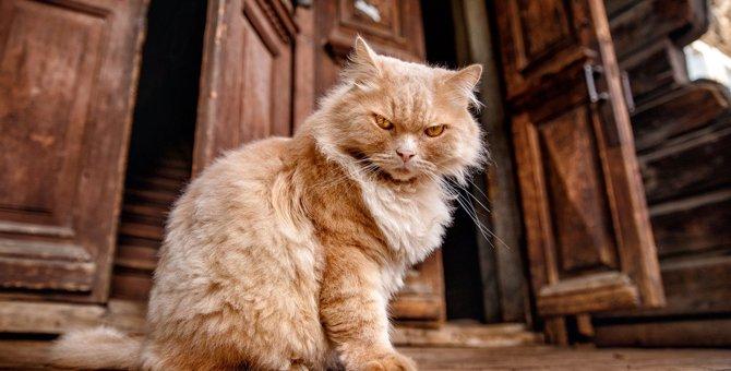 猫にとって『嫌がらせ』になる5つの行為