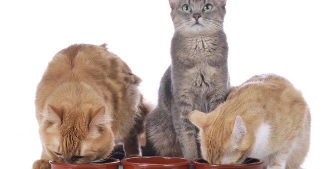 猫のアイムス(IAMS)特徴やおすすめ商品まで