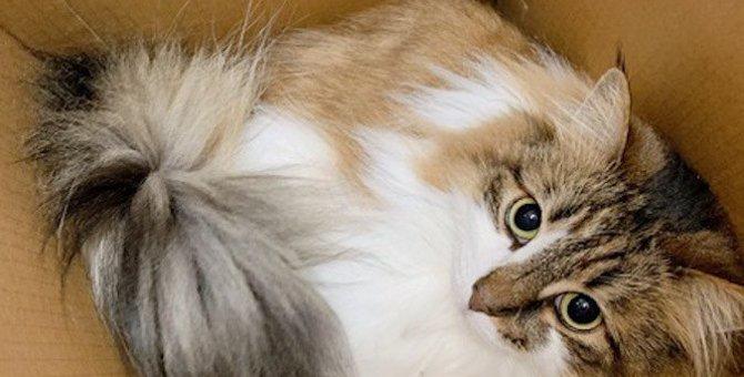 猫を飼いたい人が意識するべき家選びのポイント4つ