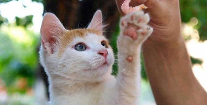 猫にエビはNG!その理由とは