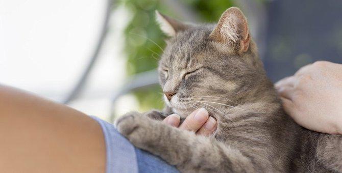 猫が飼い主に慣れた証拠7つ