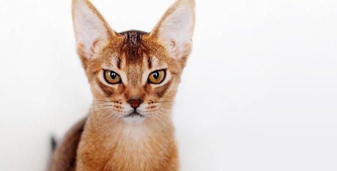 猫に『ウザい!』と思われてしまう行動5選