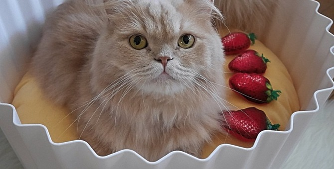 可愛すぎる猫のパティシエたち
