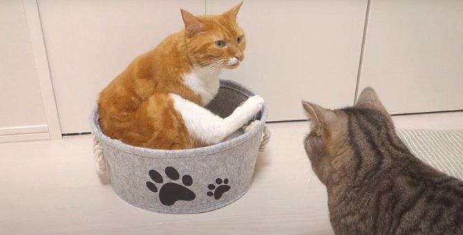 猫ちゃんに新しいベッドをプレゼント!でも実は…?