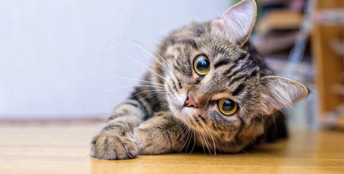 室内飼いでも気をつけて!猫にとって危険な『寄生虫』とは?