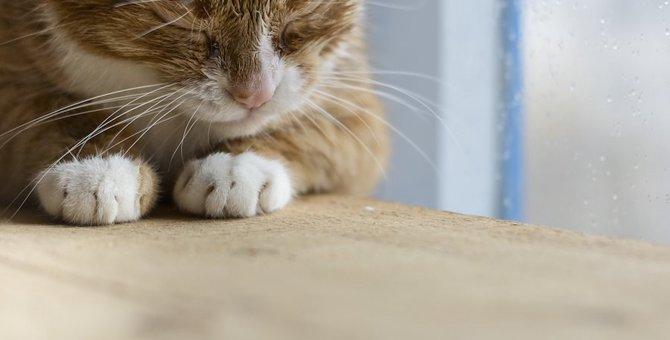 猫が「グゥ」って鳴くのはどんな時?7つの気持ち