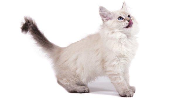 猫が上機嫌な時にする尻尾の動き3つ