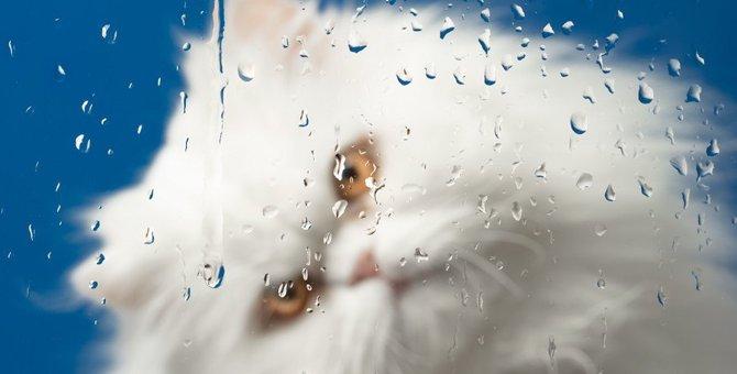 猫が『雨の日』によく鳴く・暴れる5つの理由と対処法