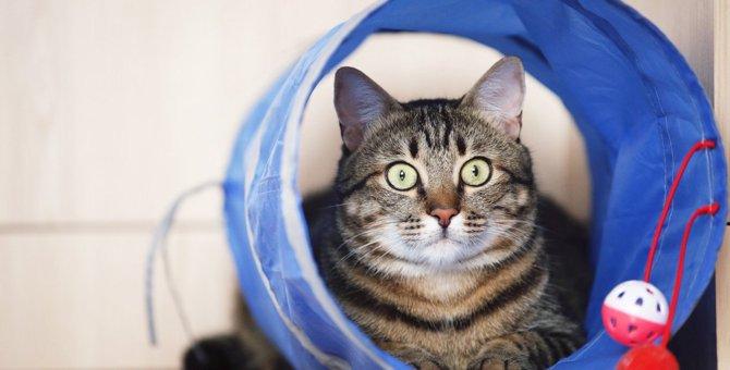 『面倒くさがりな猫』と上手に遊ぶ3つの方法