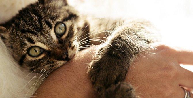 猫が『寂しかった』ときにする行動・仕草4選!今すぐできる愛猫へのケアとは?