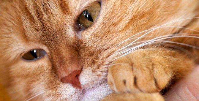死んだ猫が悲しむ飼い主の6つの行動