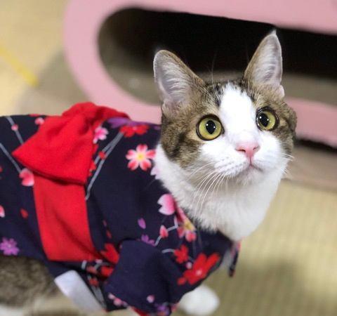 初対面の猫に懐かれる人の特徴4つ