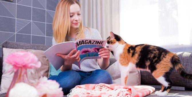 ananの猫企画が復活!「にゃんこLOVE ふたたび」 に掲載する猫ちゃんを募集中!応募方法や締切日
