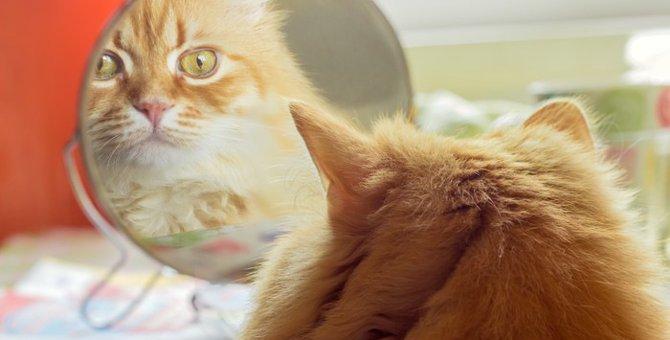 猫は鏡の自分が理解できる?無反応な時の心理やリアクション