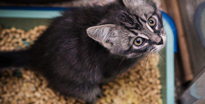 猫砂の交換はどれぐらいの頻度がいい?交換しないと起こる怖い話