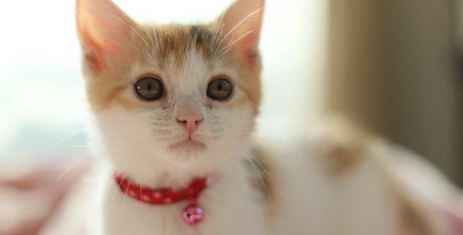 猫の首に鈴をつけるのはアリ?ナシ?