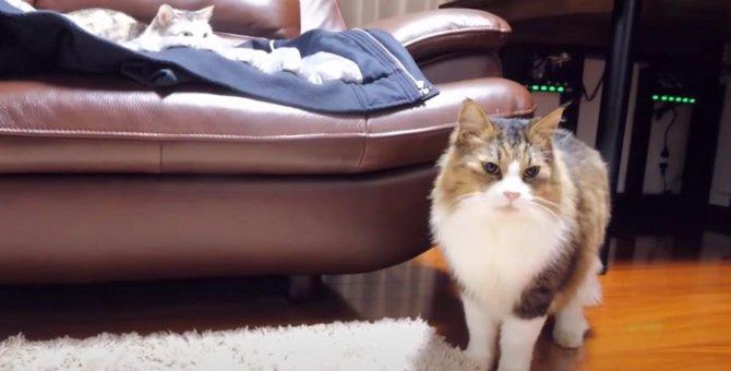 気になる猫ちゃんの目のシミ…検査の結果驚くべきことが!?