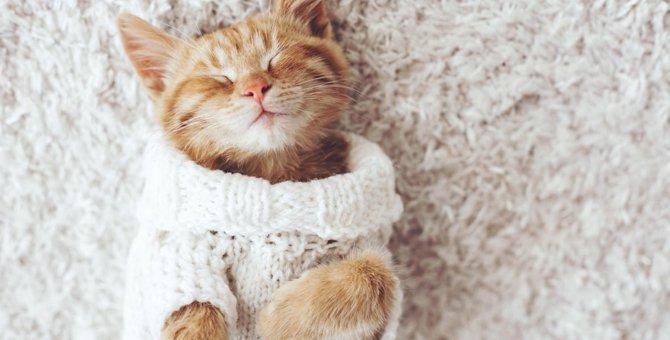 猫柄の夏用ラグカーペット6選