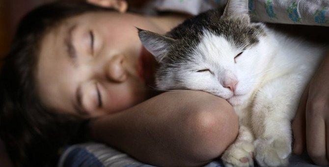 猫に夜を静かに過ごしてもらう為の6つの対策