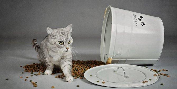 猫が『ご飯を撒き散らす』ときの気持ち4つ