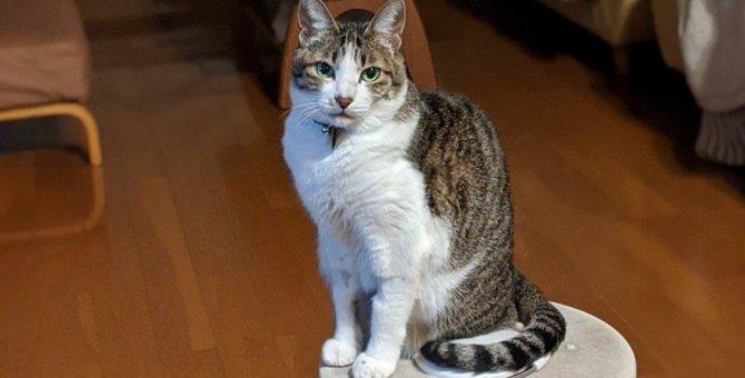 先住猫を亡くした心の穴を埋めてくれた子猫。今では我が家のボスに