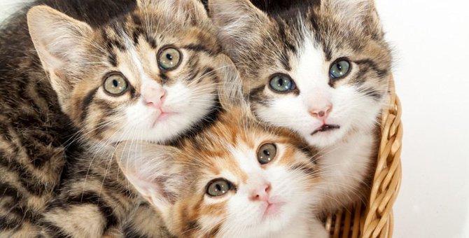 メリットがたくさん!猫の多頭飼いについて