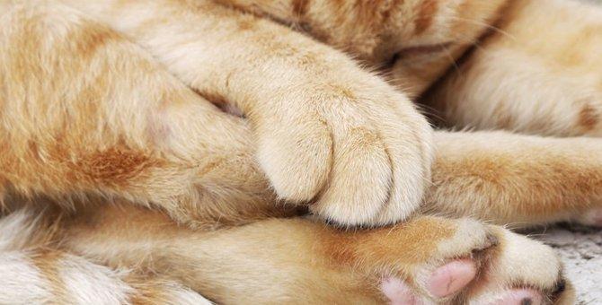猫の肉球ケアしてる?肉球の役割とケア方法
