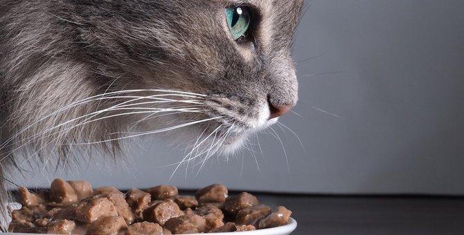 猫がご飯を咥えて持って行ってしまう4つの心理