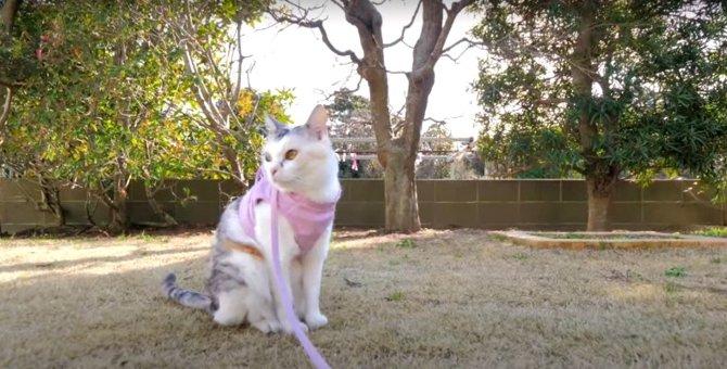 交代でお庭探検!ほっこり幸せな猫さんたち♡