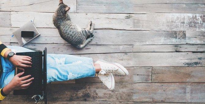 猫に関わる仕事について 職種や必要な資格をご紹介