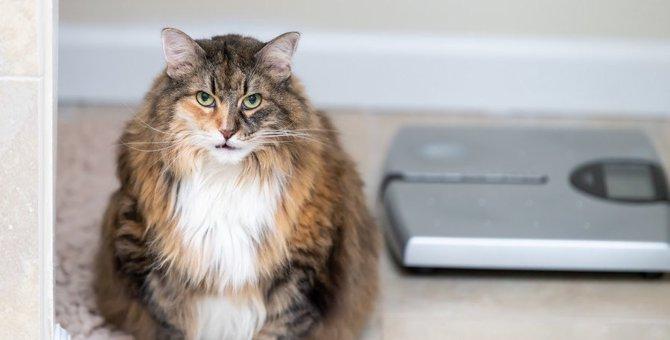 効果的でストレスフリーな猫のダイエット法5つ
