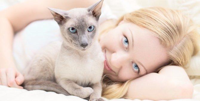 猫が髪の毛を噛む時の気持ちや理由、やめさせる方法