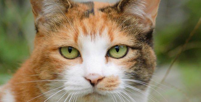 猫の目の色はどんな色があるの?そのカラーバリエーションとは?