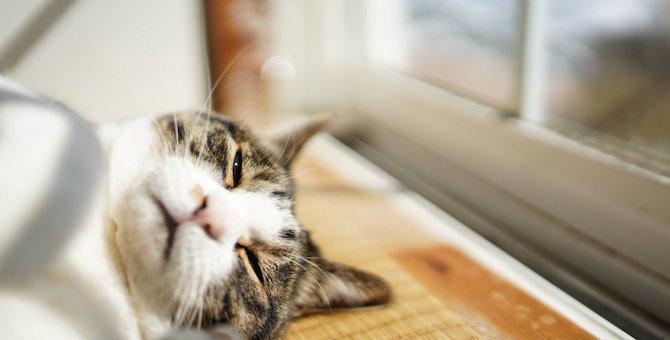 『免疫力が低い猫』の特徴5選!どうやって免疫力をつければいいの?
