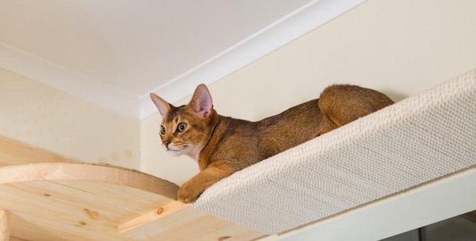 猫の関節炎のサプリの効果や選び方、おすすめ商品