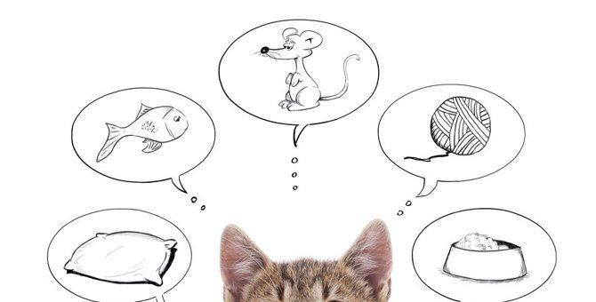 猫が思い描く理想の生活って?6つの暮らし方