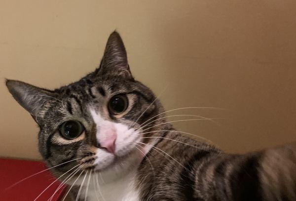 猫の素敵な写真が撮りたい!インスタ映えする撮影方法5選