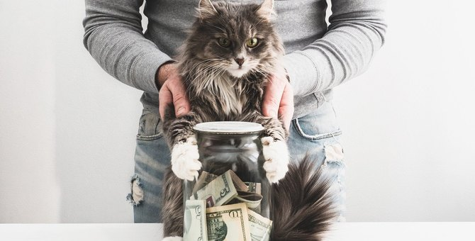猫の『ペット保険』は必要?飼い主が知っておきたい保険知識5選