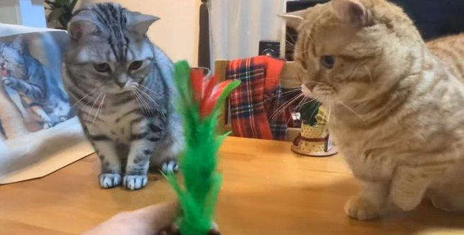 見慣れた手品に毎度驚いてくれる猫ちゃんが可愛い♡