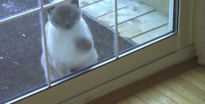 帰宅した猫ちゃんの「超高速」ノック!