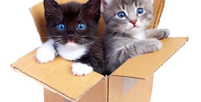 猫を拾いたい、捨て猫が多い場所7選