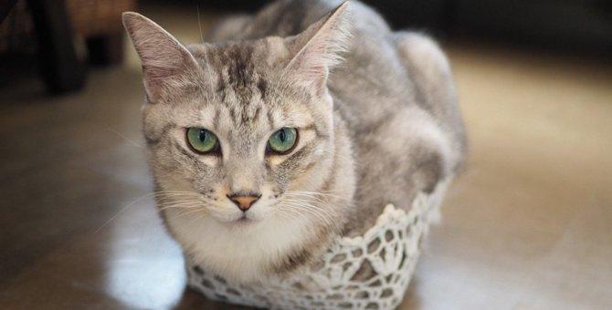 猫が『苦手な人・嫌いな人』には絶対見せない仕草5つ