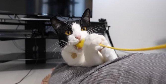 欲の狭間で足掻く猫ちゃん…不思議な動きに!
