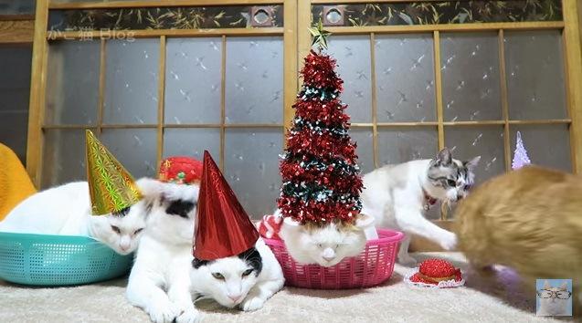 【メリークリスマス!】三角帽子を被ってお祝いだニャ♪