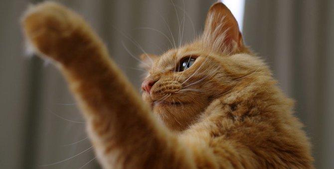 """猫が何もないところに""""パンチ""""するのはなぜ?"""