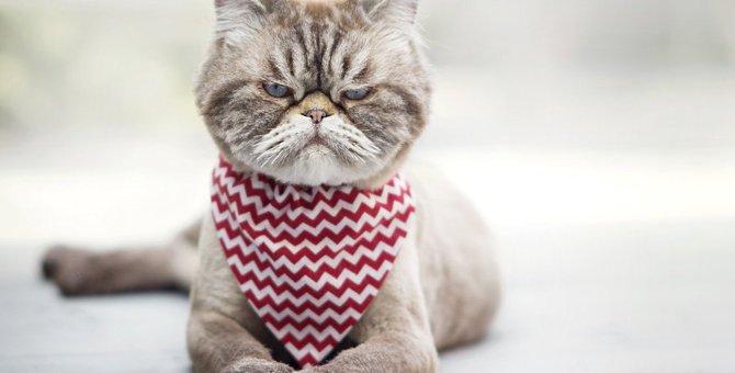 猫が飼い主に怒っている5つのこと