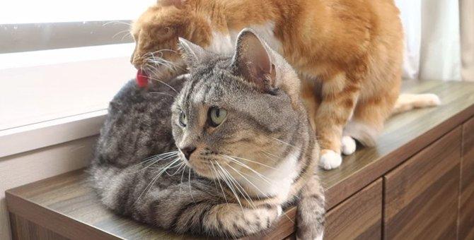 妹のお世話をする姉猫ちゃんに癒される♪