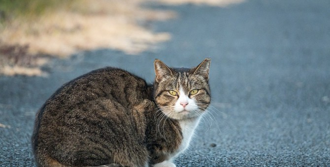 猫は生活環境によって『顔が変わる』って本当?愛猫はどんな顔つきをしていますか?